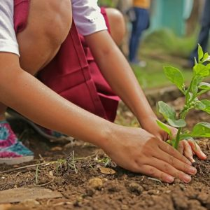 Добрата новина: Първокласници засадиха 40 дръвчета, за които ще се грижат докато завършат училище