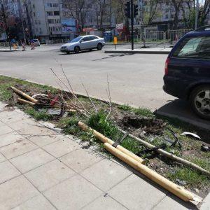 Новопосадени дръвчета вече са убити
