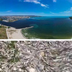 Тонове мъртва риба край Варненското езеро /ВИДЕО/