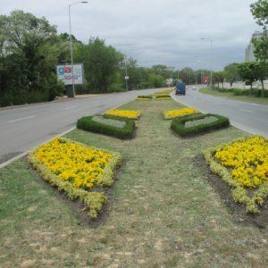 Увеличават на 3700 кв. м площите, засадени с цветя в кметство